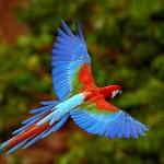 Fotos incríveis, de animais incríveis