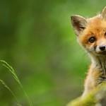 As melhores imagens de animais do bing #1