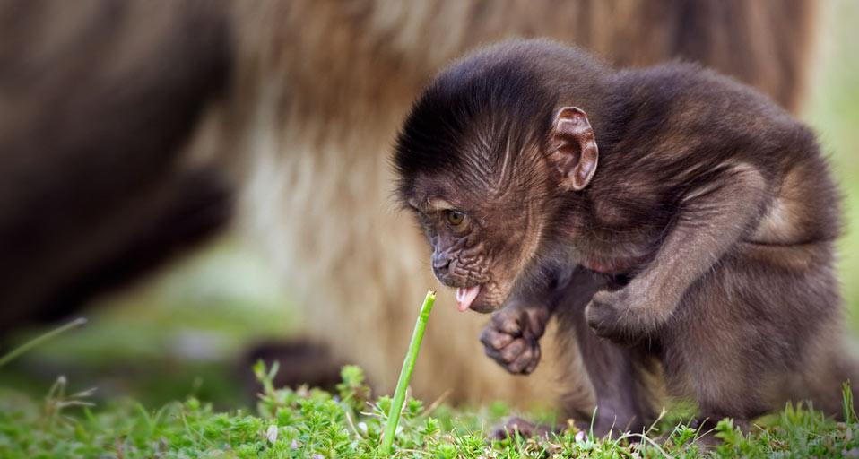 As melhores imagens de animais do bing